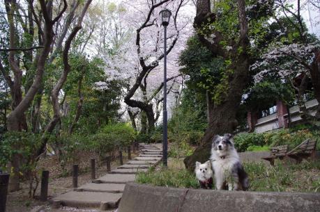 桜の木の前で