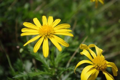 2黄色の花