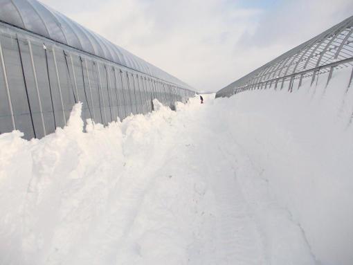 20130127_除雪中
