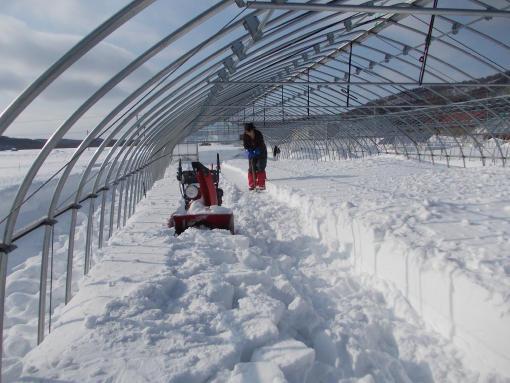 20130219_ハウス内除雪