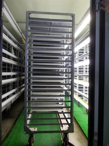 20130131_苗生産施設5