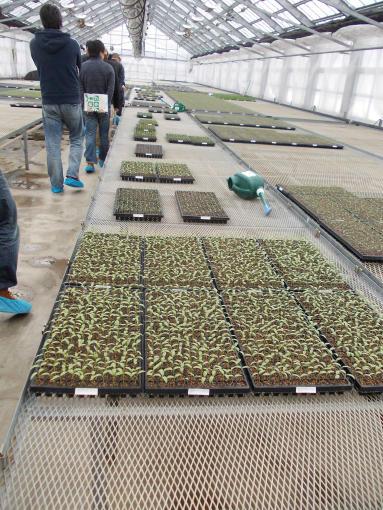 20130131_苗生産施設6