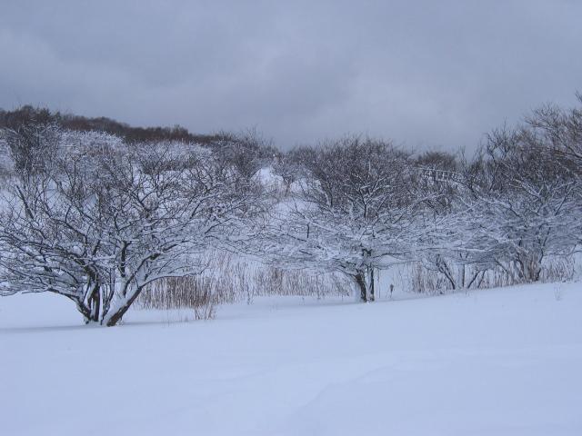149_4939雪景色