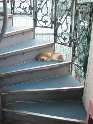 猫(非常階段)