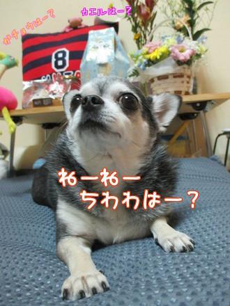 チャポリ&ナオミ&ぷ~が(半身)