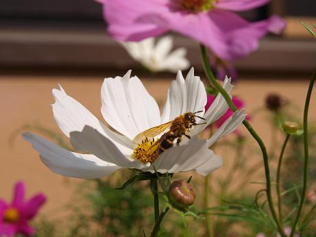 028 蜂