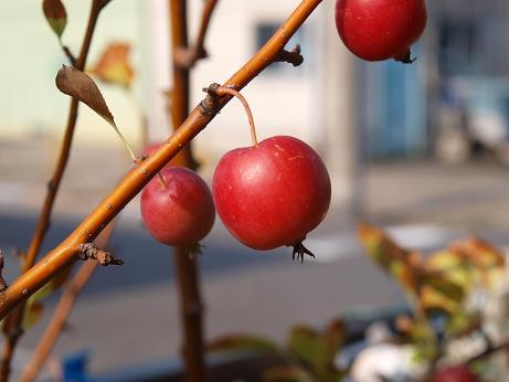 022 姫リンゴ