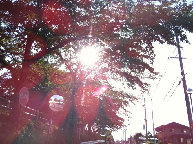 IMG_0134_convert_20110709181235.jpg