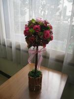 ogasawara2012 2