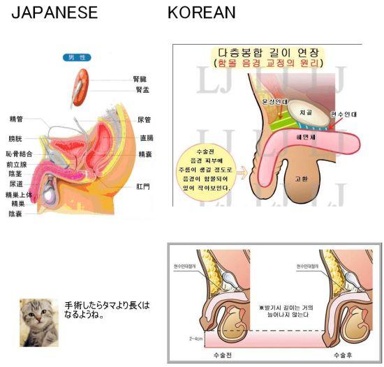 JAPANESEVSKOREANWWW1.jpg
