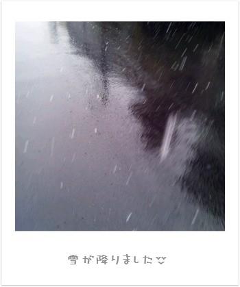 雪が降りました。+゚.。+。(´ω`*)♪♪