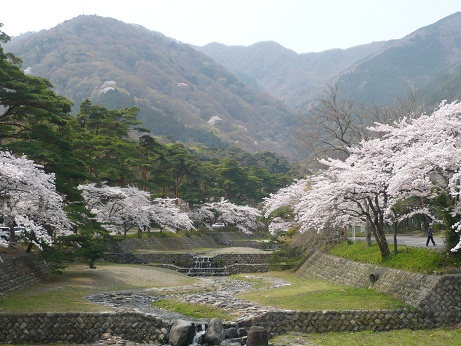 *山間に咲く桜~*