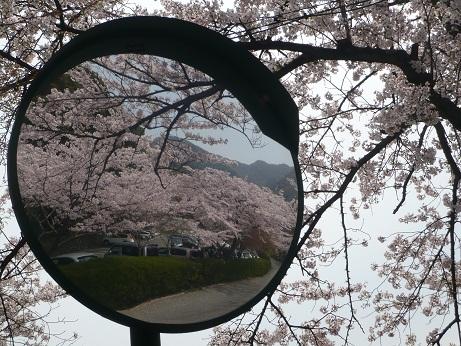 *ここにも桜*
