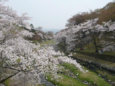 *花曇の桜は寂しいね~*