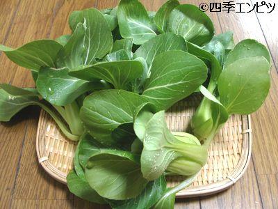 20110109 チンゲン菜 収穫