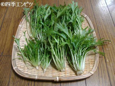 20110109 水菜 収穫