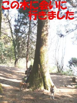 bP1130203.jpg