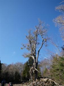2009-12-27-048.jpg