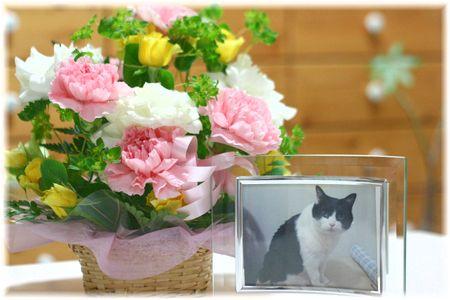 やまだの誕生日のお花♪