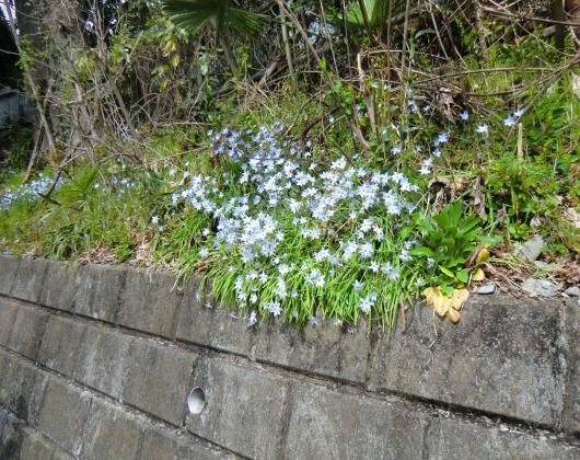 多摩川沿い(花)