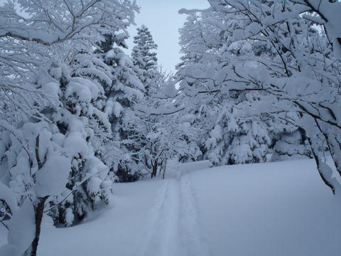 クリスマスツリーの中
