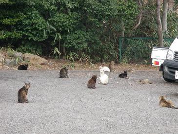 100315駐車場の猫