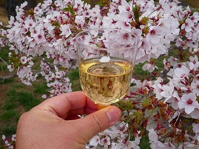 花びらを浮かべた桜酒ならぬ桜ワインで「乾杯!」