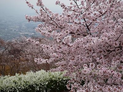 美の山は関東の吉野山と謳われています
