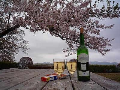 桜を愛でながらワインで乾杯