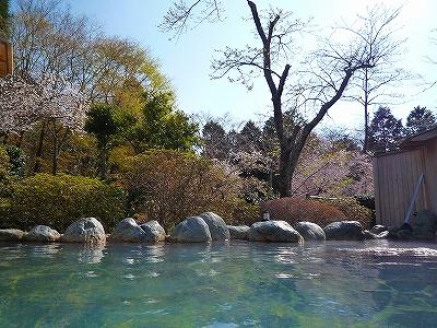 桜を眺めながら温泉でまったり