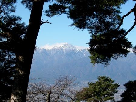 松の木の間から常念岳