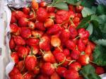 ドイプイ苺たち。.