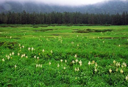 高天原湿原2