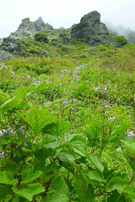 夏の名残の花
