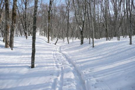 健康の森のトレース