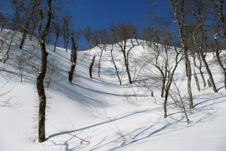 綺麗な青空と雪の森