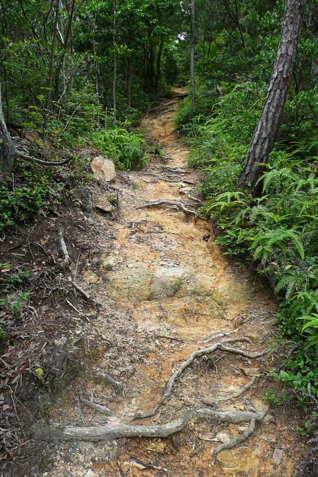 分岐後の登山道