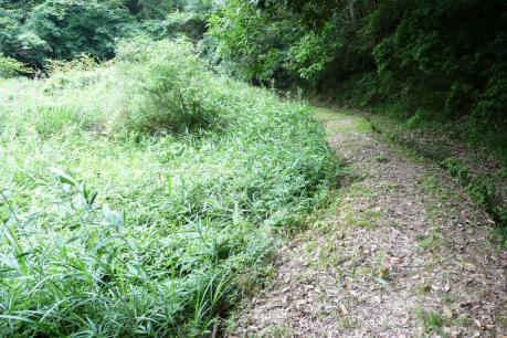 ふるさと自然の道