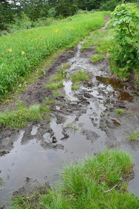 湿原状態の道