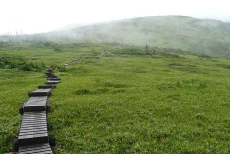草地の木道