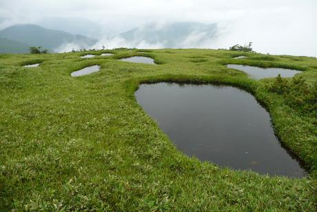 草地の池塘