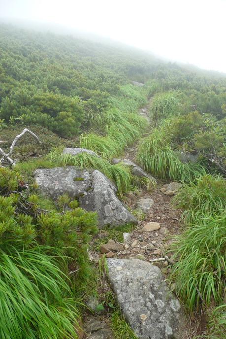 北ノ俣岳下部の登り道