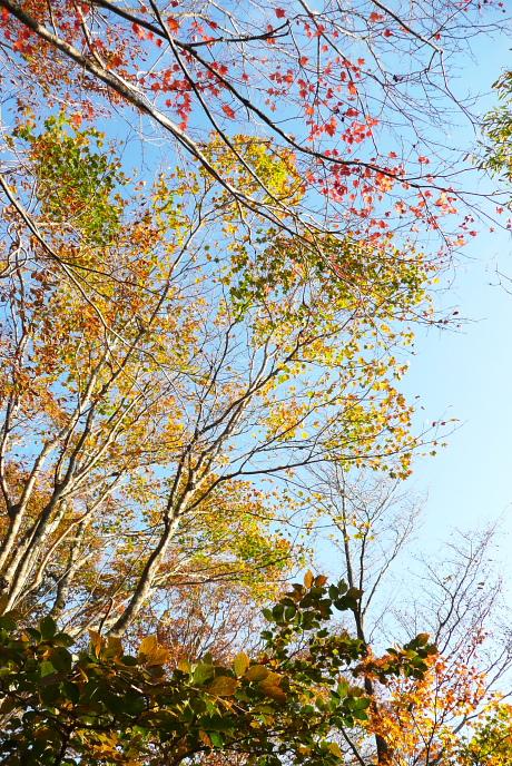 さわやかな青空と黄葉