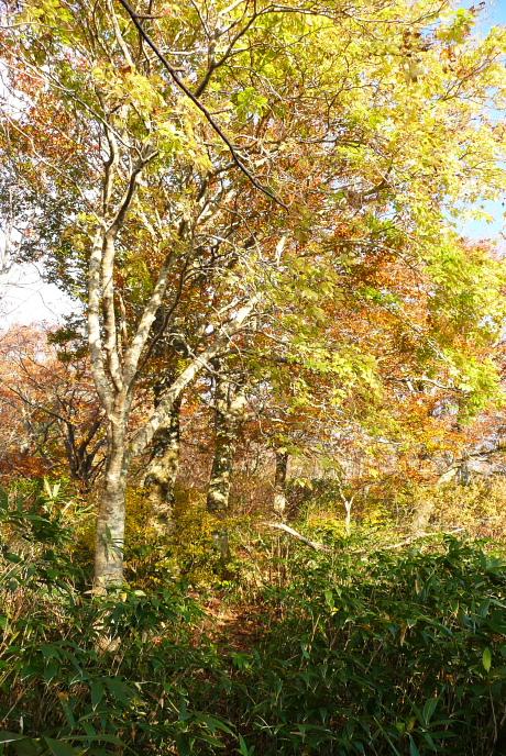 黄葉の並木
