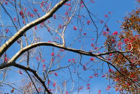 真っ赤な木の実