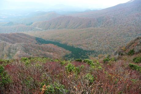 木谷のブナ林