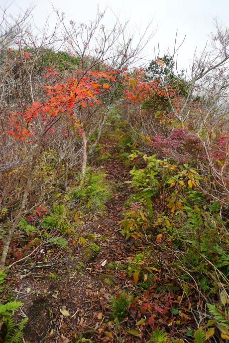 紅葉が残る尾根道