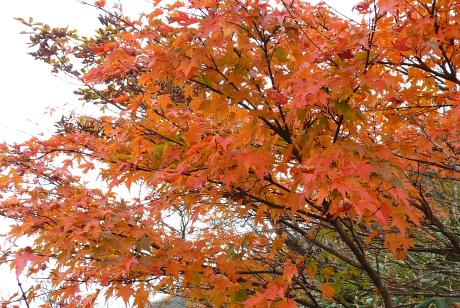 鮮やかな紅葉