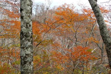 1200m付近の紅葉