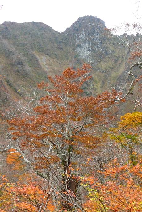 紅葉と烏ヶ山